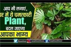 benefits of mayur shikha plant according to vastu shastra
