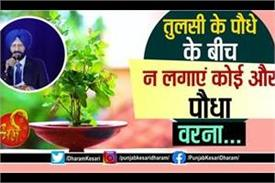 vastu shastra tips about tulsi in hindi