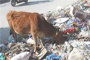 srinagar is the dirtiest city in india