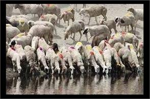 200 sheeps dead in ramban