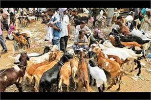 people seen busy in bakareid shopping in poonch