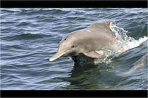 up central government to protect dolphins found in ganga