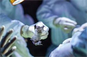lockdown corona virus five states bats