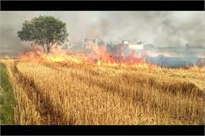 wheat crops gutted in fire in kathua