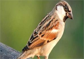 birds fly right or not the supreme court decision will