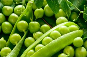 peas price jumps to all time high at rs 160 per kg