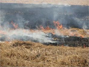 used parali burn falling on the soil fertility and human health affected