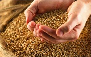 up 14 per kg of wheat seed grants