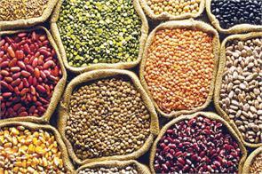 wholesale pulses market green lentils