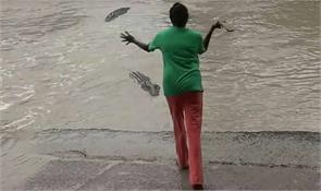 woman shoos away giant croc with her slippers