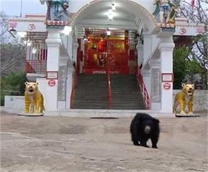bears worship in this temple