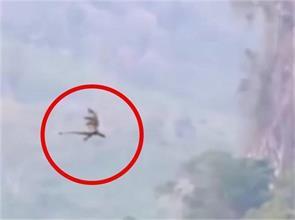 video of flying dragon viral on social media