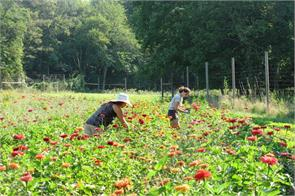 agriculture  business india  flowers salary jobs