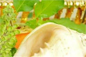 shankh  shellfish