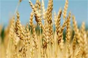 rabi crop  vegetable growers