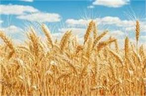 wheat  government of india