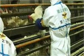 japan culling 230 000 more birds over avian flu