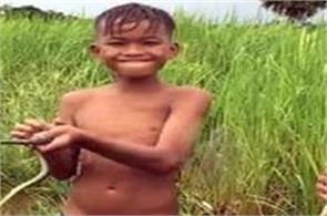 cambodia  snakes  social media  viral