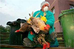 due to bird flu killed 8 500 chickens in tripura and bttke