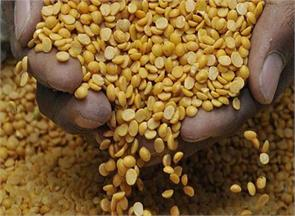 government will import 5 000 tons of dal