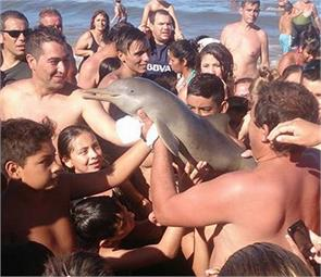 babydolphin died due to selfie lover crowd