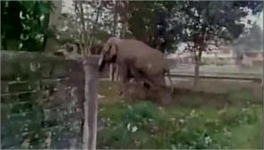 elephant police city siliguri sanjay dutta