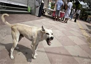 stray dogs continued to bite deaths