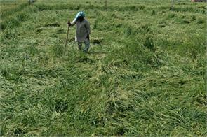 rains on crops crisis