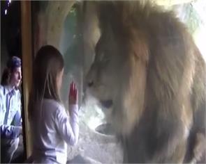 social media lions video