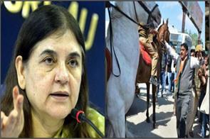 maneka gandhi bjp legislator who broke the leg of the horse brsin