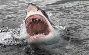 woman killed by shark in australia