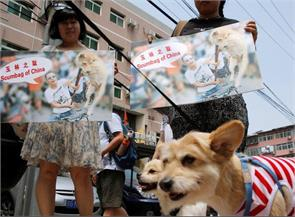 chinese oppose yulin dog meat festival 2016 in survey