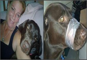 woman who taped dogs mouth found guily of animal cruelty