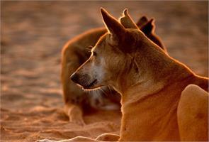 50 stray dogs burnt alive in village near chennai