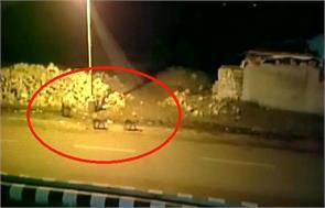 lions seen sauntering through an inhabited road of junagadh