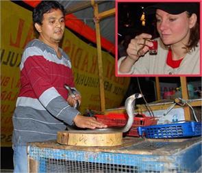 snake blood drink in jakarta
