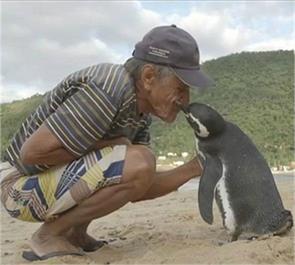 penguins glaciers joao pereira desouza animal