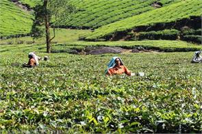 tea indian tea exports