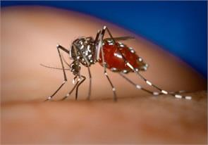 423 cases of chikungunya in delhi were increased