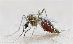 china says 21 of its nationals in singapore infected with zika
