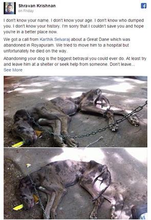 viral fb post on the death of a great dane abandoned to starve