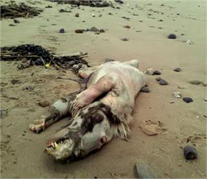 mysterious creature that have washed up on shore