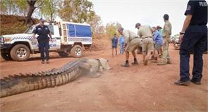 14 long crocodile was captured by police in the northern territory