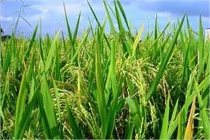 relief for farmers increase in minimum support price of 110 rupees