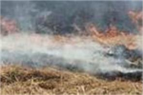 ngt said to punjab present 21 such farmers who prevented burning pollution