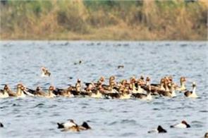 50 bird samples not found in flu