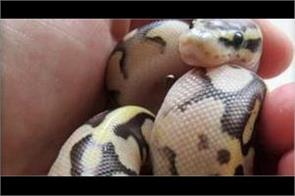 german police bust man with python in pant