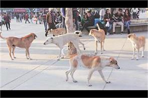 stray dogs fear in kashmir