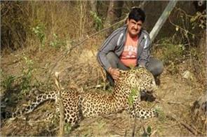 body of leopard found in samba