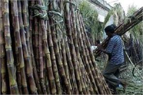 now farmers sms sugar cane from dco